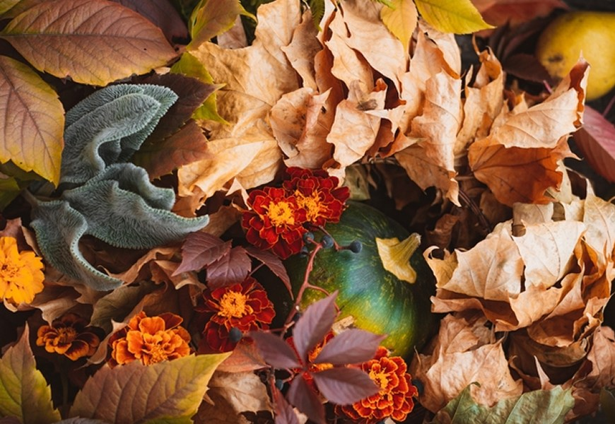 Gorgeous Fall Colors You Can Have For Your Home
