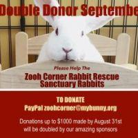 Zooh Corner Rabbit Rescue