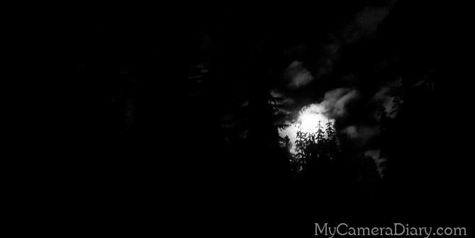 Seattle Photo   The Kingdom of The Dark