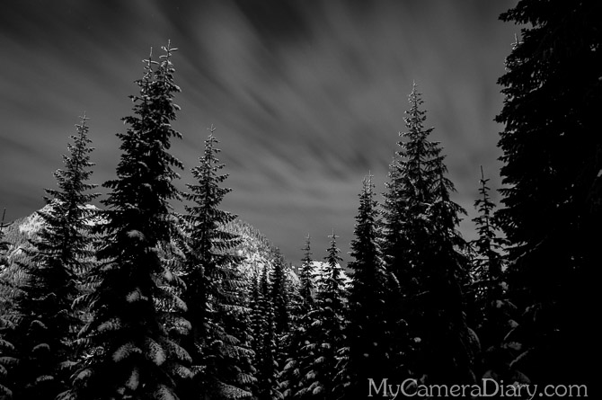 Seattle Photo   Forest of The Night Land