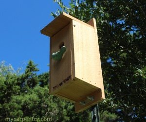 Bluebird Birdhouse Plans Complete Step By Step
