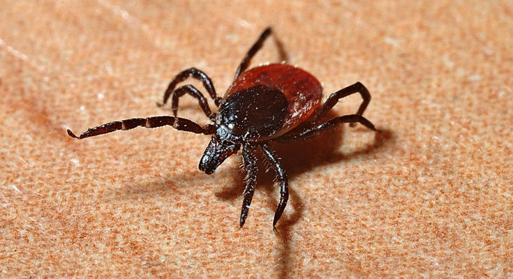 Ticks, Lyme Disease