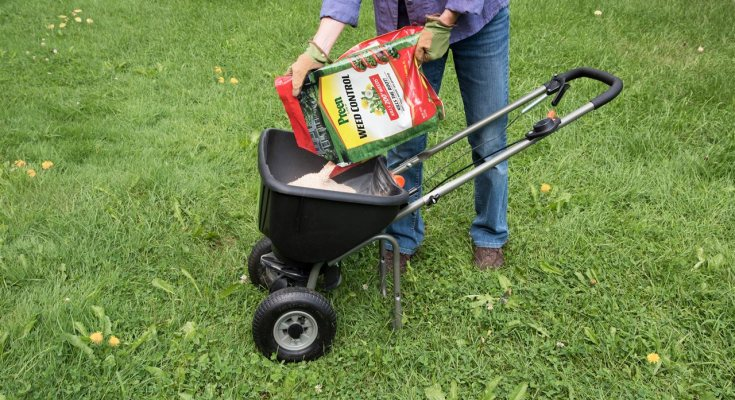 Expert Lawn Care Tips For A Weed Free Yard Mychesco