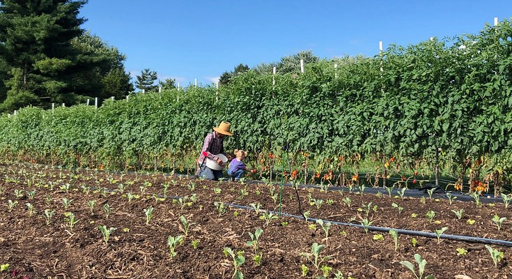 Local Farm Finds Success in Staying Small