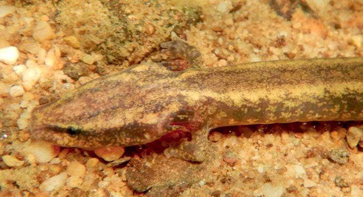 Pennsylvania Amphibians & Reptiles