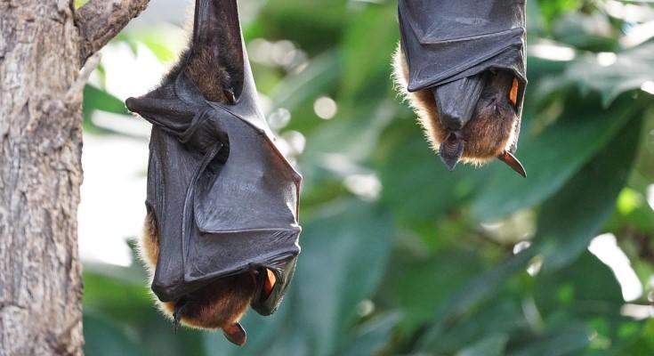 Pennsylvania Drafts Bat Conversation Plan