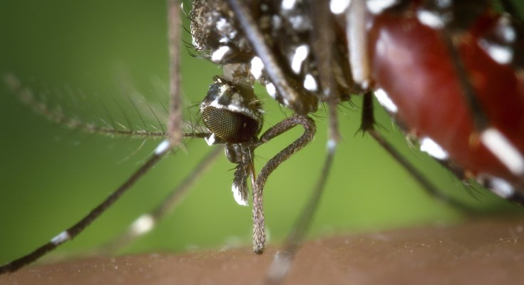 Pennsylvania Reports First Human Case of West Nile Virus in 2020