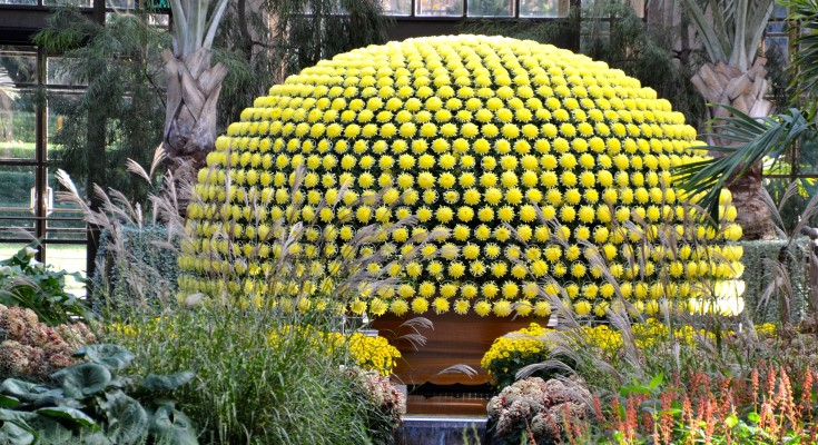 Chrysanthemum Festival On View October 22-November 15