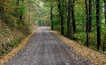 Additional State Forest Roads Opening Throughout The State For Hunting Seasons, Other Outdoor Activities