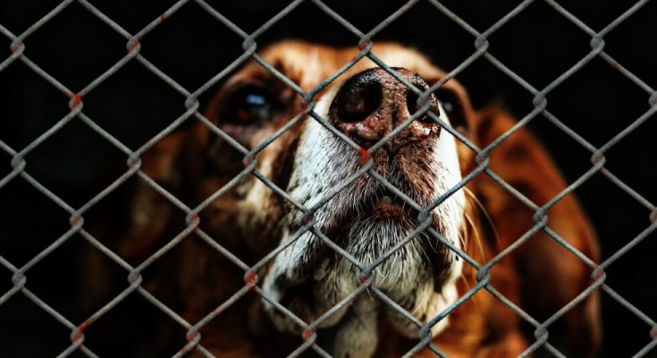 Dinniman Calls for Legislation to Protect Dogs, Consumers