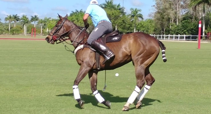 Malvern Bank Sponsors Brandywine Polo Club for 6th Consecutive Year