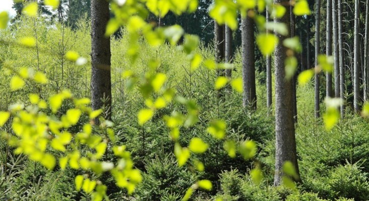 DEP Increases Permitting Efficiency, Maintains Environmental Protection Amid COVID-19 Pandemic