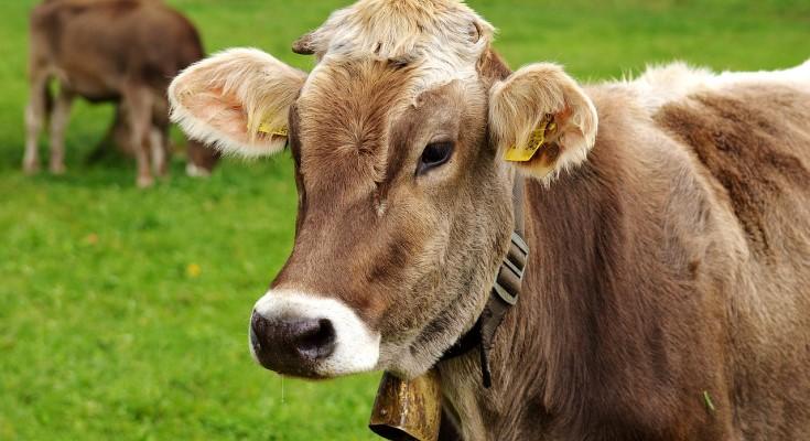 USDA Co-hosts Free Webinar on Nov. 12 on Livestock Risk Management