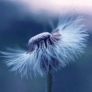 Quel vento gelido / That icy wind