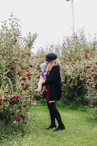 apple orchard family photos