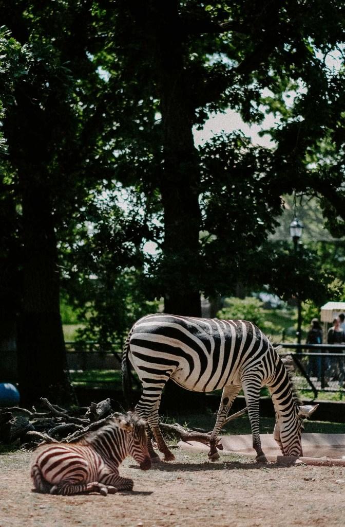 como park conservatory and zoo Minneapolis Minnesota