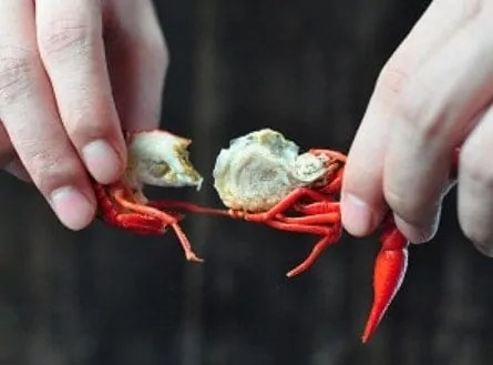 How to Eat Crayfish Like a Pro Step3