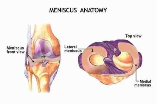 top view on meniscus anatomy