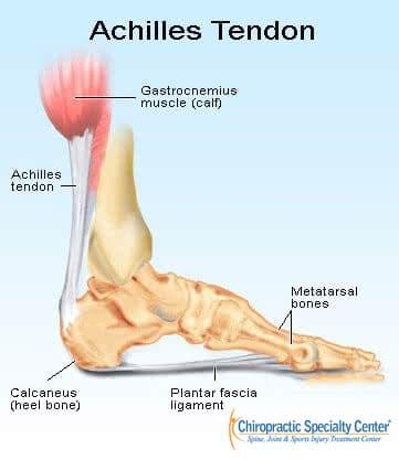 achilles tendon attachment to the heel