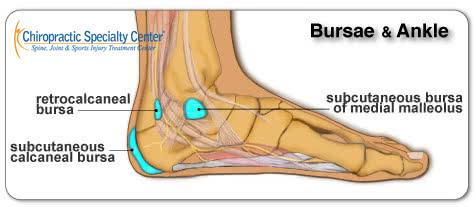 illustration of ankle anatomy
