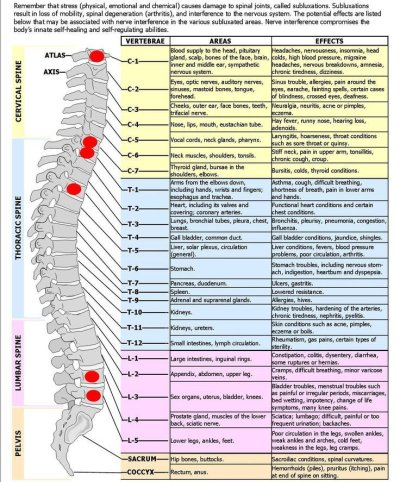 Meric spine chart that shows nerve control on bodily functions