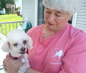 Rescuer Daryl Masone of Naugatuck holds Dove Bar, a miniature poodle, who had an eye removed after being neglected by her previous owner in her home last week. –RA ARCHIVE
