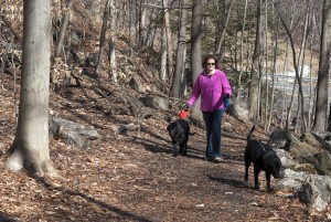 Wolcott resident Lisa Ciarlo walks with her dogs Java and Cosmo on the Larkin Bridle Trail in Naugatuck on Saturday. Naugatuck Mayor N. Warren 'Pete' Hess is proposing a series of new trails in the Naugatuck State Forest. -REPUBLICAN-AMERICAN