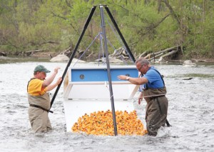 Beacon Falls Lions Club member Michael Krenesky, left, and club President Bill Mis release hundreds of rubber ducks into the Naugatuck River for the club's annual Duck Race last year. -FILE PHOTO