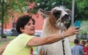 FEAT_NEWS_LlamaStFrancis2