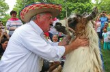 St. Francis-St. Hedwig School Principal John Salatto prepares to kiss Feather the llama May 27 at the school's field in Naugatuck. The kiss was part of the school's Kiss the Llama Day, which celebrated the students reading over 5,000 books during the school year. Salatto promised the students he would kiss a llama if the students were able to read 5,000 books. –LUKE MARSHALL