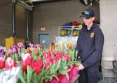 Naugatuck Firefighter Bill Drew straightens out flowers at fire headquarters on Maple Street April 13 during the Naugatuck Firefighters Local 1219's annual Easter Flower sale. The union uses the money to help the community, including sponsoring sports teams, school functions and borough events. –LUKE MARSHALL