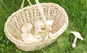 """Résultat de recherche d'images pour """"champignons sous bois creative common"""""""