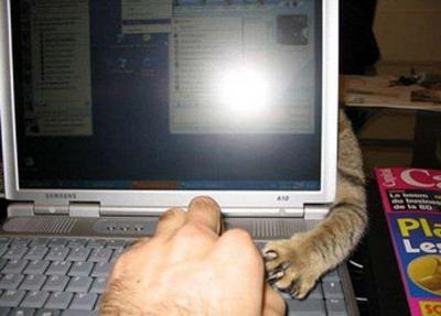 phantom-kitty-arm.jpg