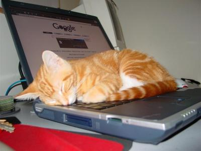 sleepy-google-cat.jpg