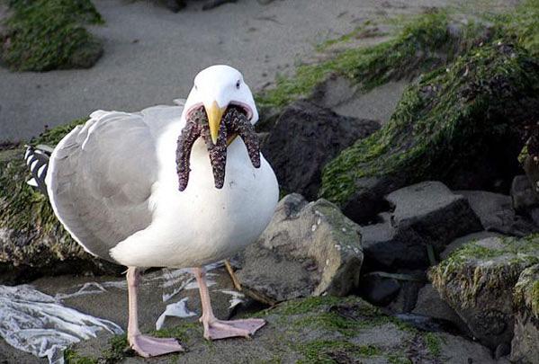 cthulhu-seagull.jpg