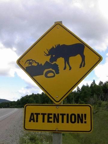 moose-wreck.jpg