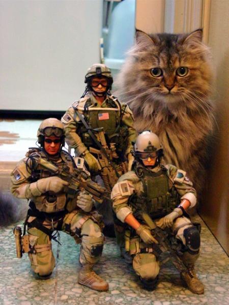 tactical-cat.jpg