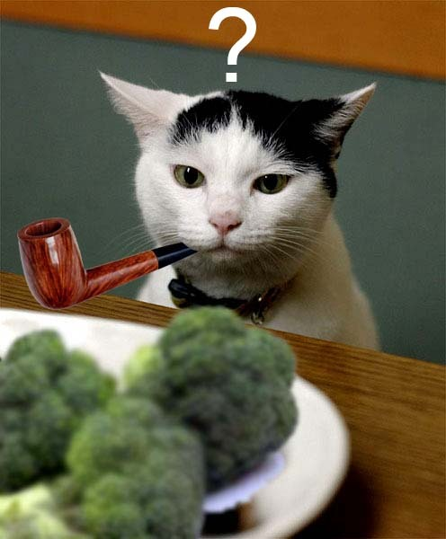 broccili-cat.jpg