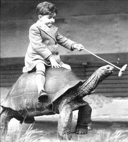 turtle-rider.jpg
