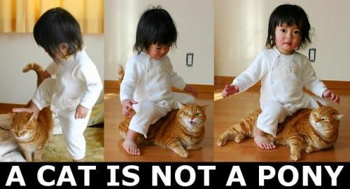 a-cat-is-not-a-pony.jpg