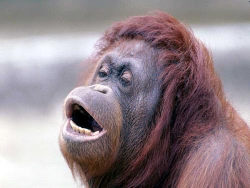 monkey-blow3.jpg