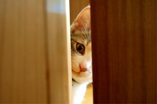 cat-peeping.jpg