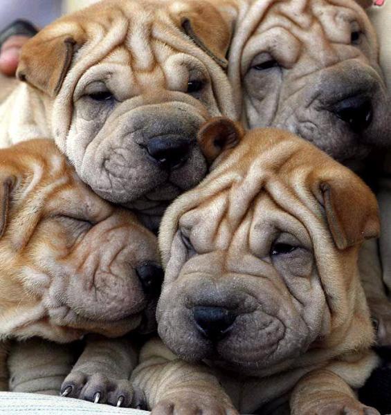 cute-puppies.jpg