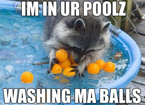 in-ur-poolz-washing-my-balls.jpg