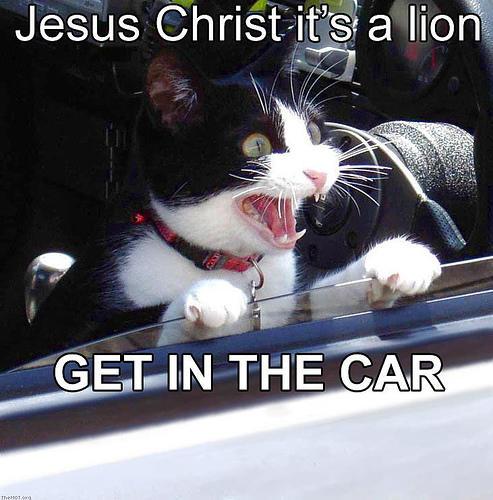 lion_getincar.jpg