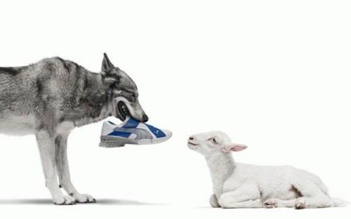 sheep-in-running-shoes.jpg