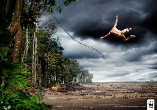 tarzan-forest-gone.jpg
