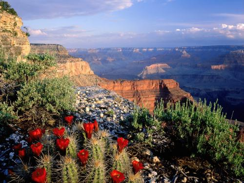 grand-canyon-red-flowers-wallpaper.jpg