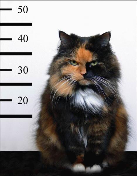 sinister-cat-line-up.jpg