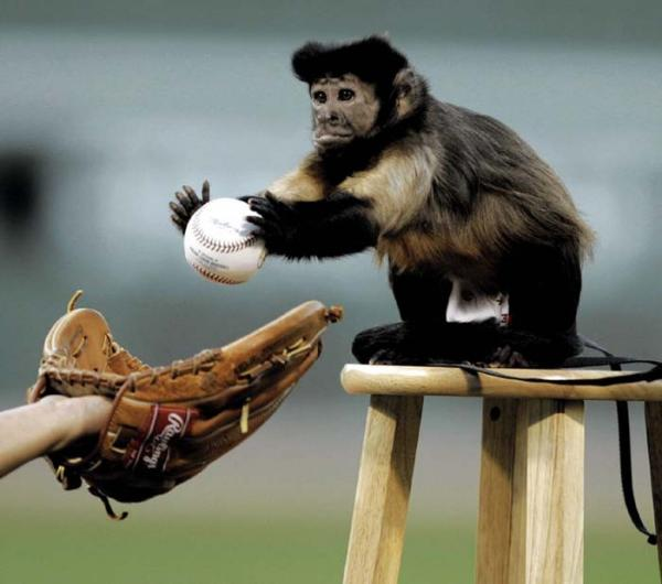 baseball-monkey.jpg